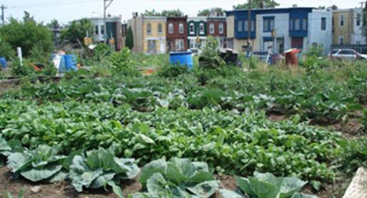 CENTER FOR URBAN AGRICULTURE & GARDENING EDUCATION Image